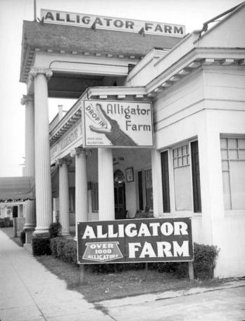 alligator-farm-los-angeles