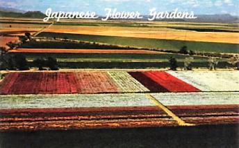 japanese-flower-garden-phoenix