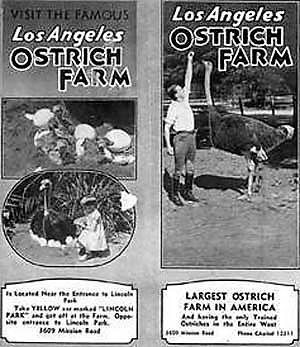 los-angeles-ostrich-farm