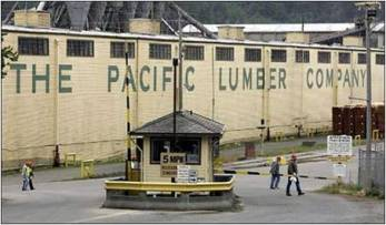 pacific-lumber-company-mill-scotia3