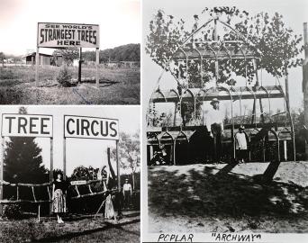 tree-circus-scotts-valley