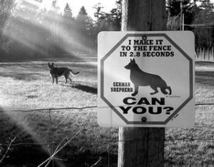 guard-dog-amusing-sign