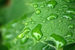 rainsdrops_leaf