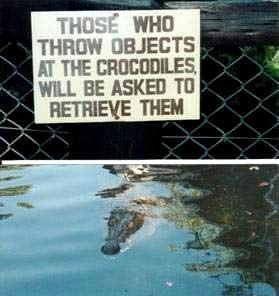 stupid_signs_crocodiles