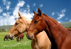 2horses