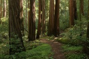 BIg_Basin_Redwoods_State_Park