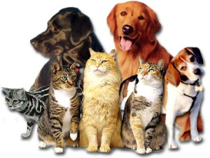 cats_&_dogs_collage