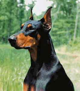 City Dog Roleplay Pictures Doberman-pinscher