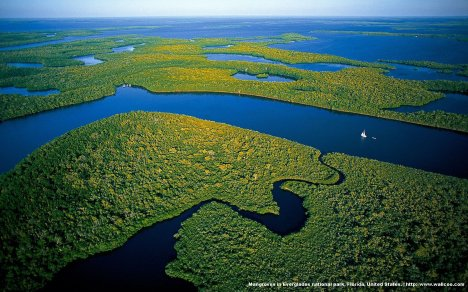everglades-national-park-florida-mangrove-trees