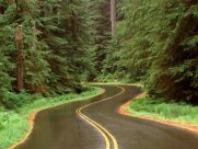 lush_winding_road,_olympic_national_park,_washington