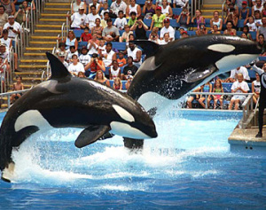 sea-world-florida2