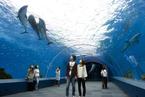 yokohama-hakkeljima-sea-paradise