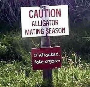 alligator_sign