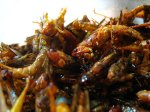 grasshoppers-fried