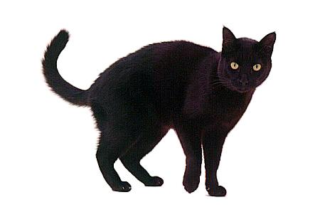 кошка черная фото - фотография 1.