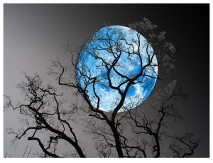 blue-moon-tree-silhouette