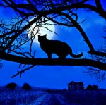 halloween-blkcat-blue-moon