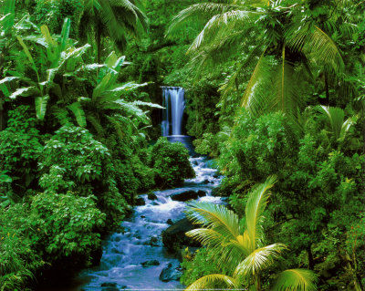 rainforest-waterfalls-stream-lushgreen
