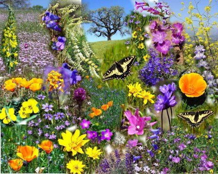 spring-flowers-collage